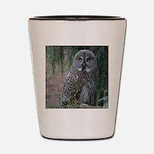 Owl_2015_0203 Shot Glass