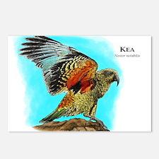 Kea Postcards (Package of 8)