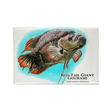 Red-Tail Giant Gourami Rectangle Magnet