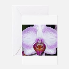 Stunning Orchid Flower Greeting Cards