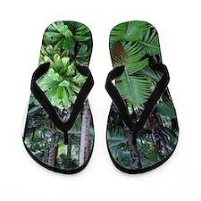 Tropical Forest 12 Flip Flops