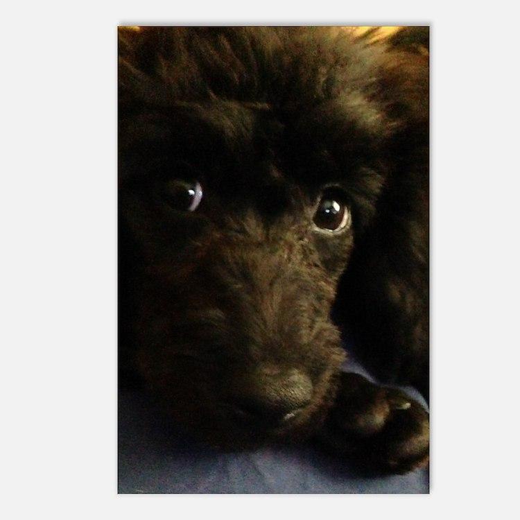 Cute Poodles Postcards (Package of 8)