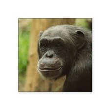 Grinning Chimp Sticker