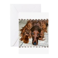 Funny Animals Greeting Cards (Pk of 20)