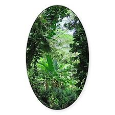 Hawaiian Jungle Decal