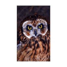 Little Owl Decal