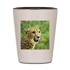 Another Cheetah Shot Glass