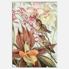 Vintage Hummingbirds and Orchids