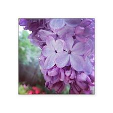 Purple Spring Sticker