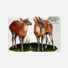 Indian Muntjac Deer Rectangle Magnet