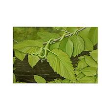 Earth Leaf Dragon Rectangle Magnet