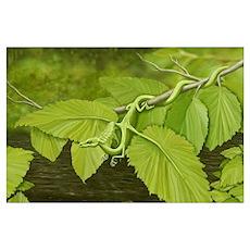 Earth Leaf Dragon Poster