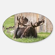 Sitting moose, Alaska, USA Decal