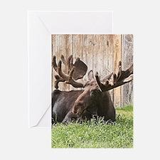 Sitting moose, Alaska, USA Greeting Cards