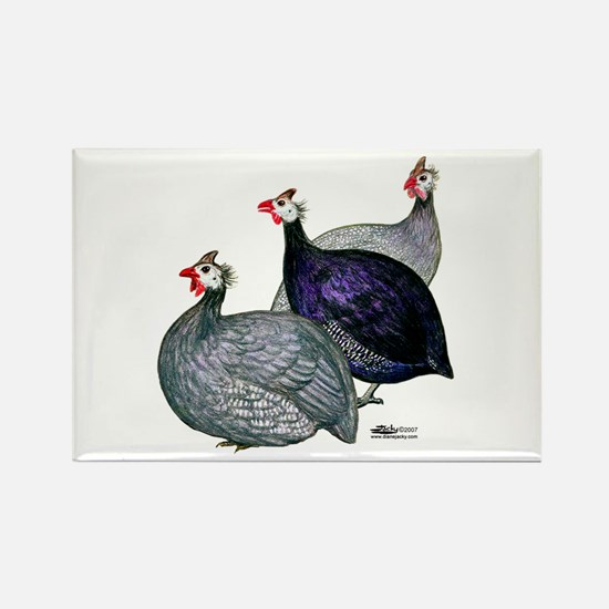 Guineas Three Magnets