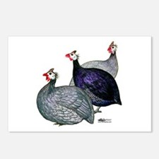 Guineas Three Postcards (package Of 8)