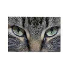 Main Coon Kitty Cat Magnets