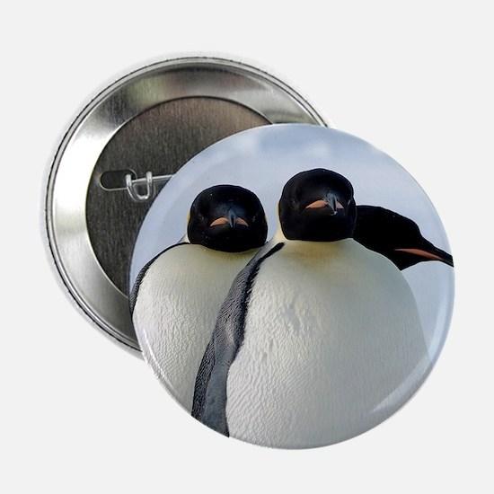 """Emperor Penguins Huddled 2.25"""" Button"""