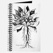 Mandragora autumn mandrake Psychedelic tox Journal