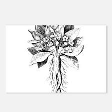Mandragora autumn mandrak Postcards (Package of 8)