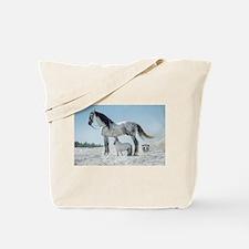 Grey Andelusian Horse Stallion With Mini Horse st