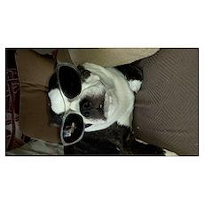 Boston Terrier Shay Poster