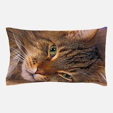 Maine Coon Cat Pillow Case