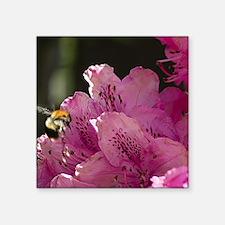"Bee Enjoying a Tasty Rhodad Square Sticker 3"" x 3"""