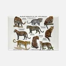Leopards of the World Rectangle Magnet