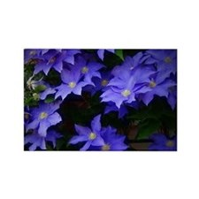 Purple Clematis Magnets