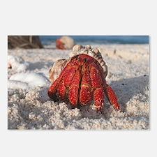 Cute Hermit crab Postcards (Package of 8)