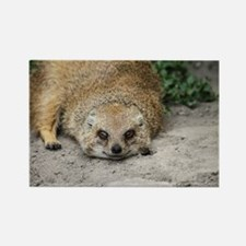 Cute Mongoose Rectangle Magnet
