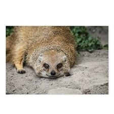 Cute Mongoose Postcards (Package of 8)