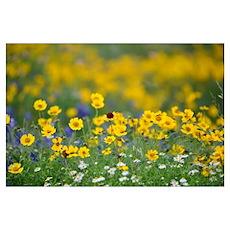 Wildflower Parade Poster