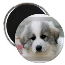 Cute Pyrenees Magnet