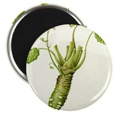 Wasabi Plant Magnets