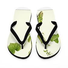 Wasabi Plant Flip Flops