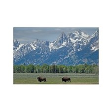 Teton Buffalo Rectangle Magnet