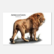 African Lion Postcards (Package of 8)