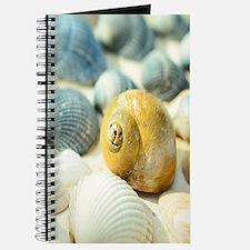 Sea Shells Journal