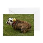 English Bulldog Greeting Cards (Pk of 10)