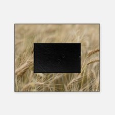 Wheat Picture Frame