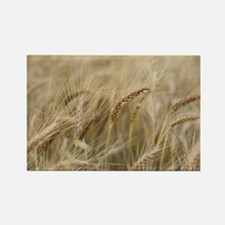 Wheat Rectangle Magnet