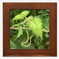 forest leaf dragon Framed Tile