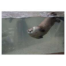 Otter Eyes Poster