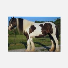 horse gypsy vanner Magnets