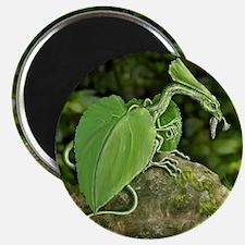 forest leaf dragon Magnets