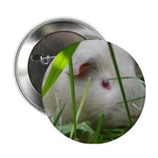 "cavy2 2.25"" Button"