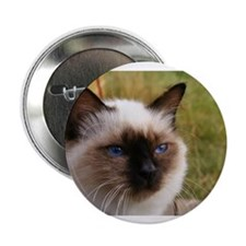 "birman 2.25"" Button (10 pack)"