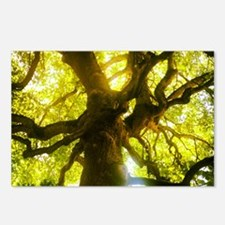 Under the Oak Tree Postcards (Package of 8)